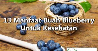13 Manfaat Buah Blueberry Untuk Kesehatan